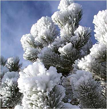 24 февраля 2004 цветы из инея